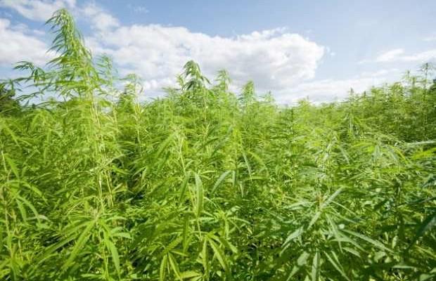 Legalizzazione della marijuana, avvenimenti principali 2016/2017