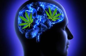Marijuana: effetti sulla memoria